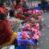lotus sellers, Ahmedabad