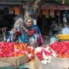 flower seller, Bundi